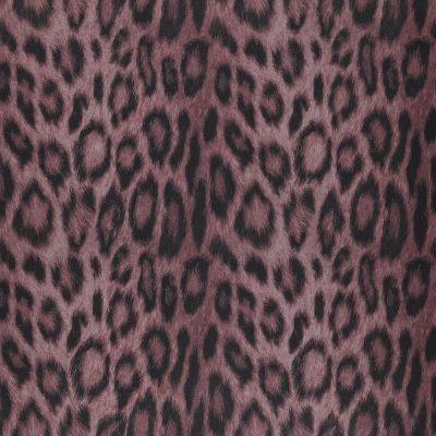 Panthera35-Amor